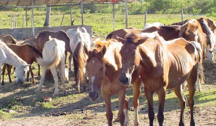 Prefeitura intensifica apreensão de animais