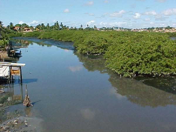 Campanha de limpeza de mangues será lançada nesta sexta