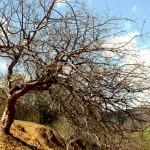 Governo vai investir mais R$ 2 milhões visando combate à desertificação  - Fotos: Sidney Gouveia/Semarh