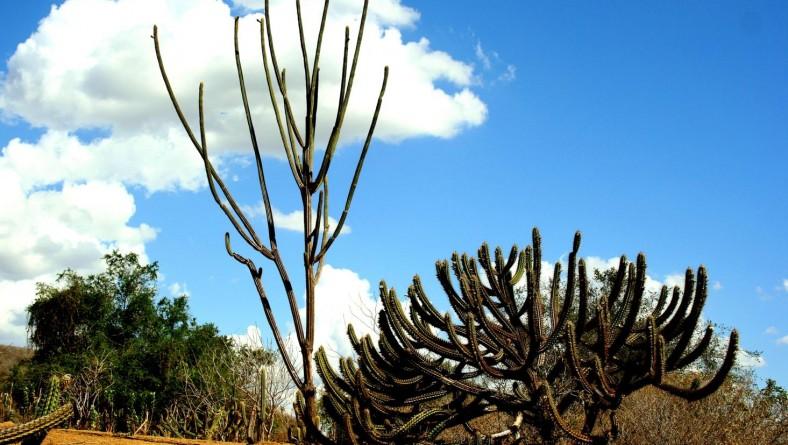 Governo vai investir mais R$ 2 milhões visando combate à desertificação