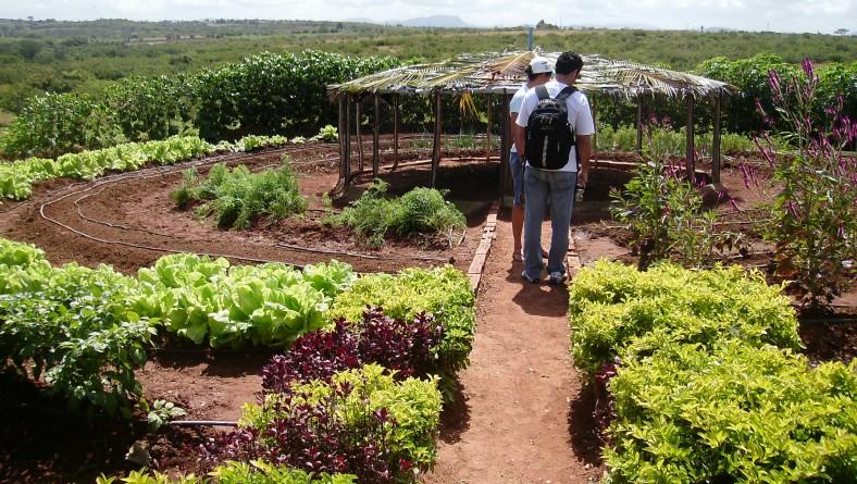 Perímetro Irrigado Jabiberi, em Tobias Barreto, sedia oficina sobre cultivo orgânico