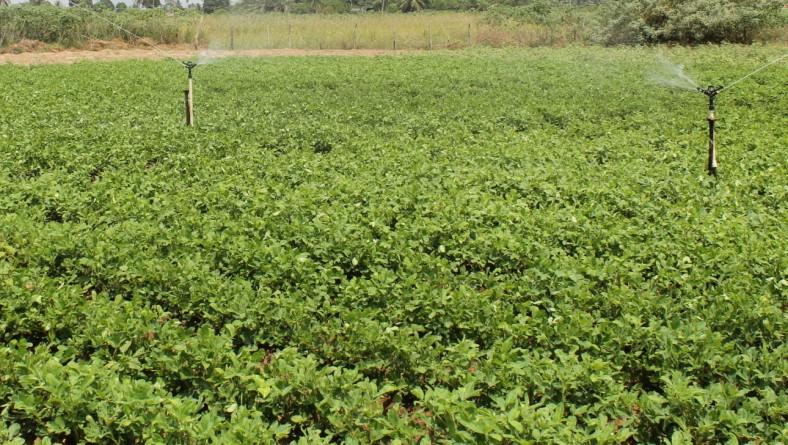 Irrigação do Jabiberi é mantida
