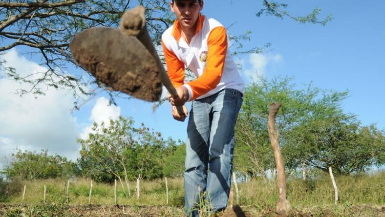 Governo investe R$ 4 milhões na preparação do solo para o plantio