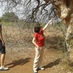 Monumento Natural Grota do Angico recebe pesquisadores internacionais -