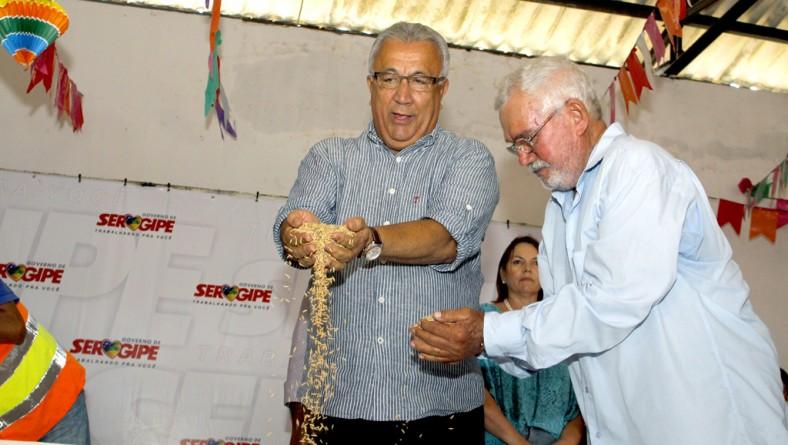 Jackson entrega 400 toneladas de sementes de arroz de alta produtividade a agricultores do Baixo S. Francisco