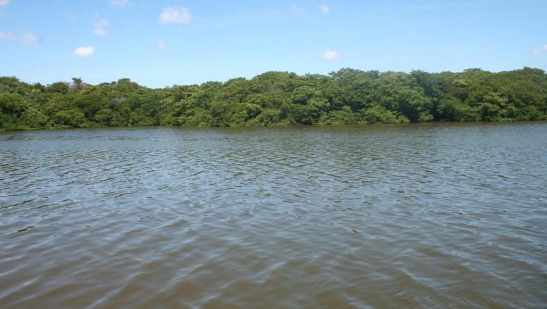 Adema investe na preservação de manguezais em 2013